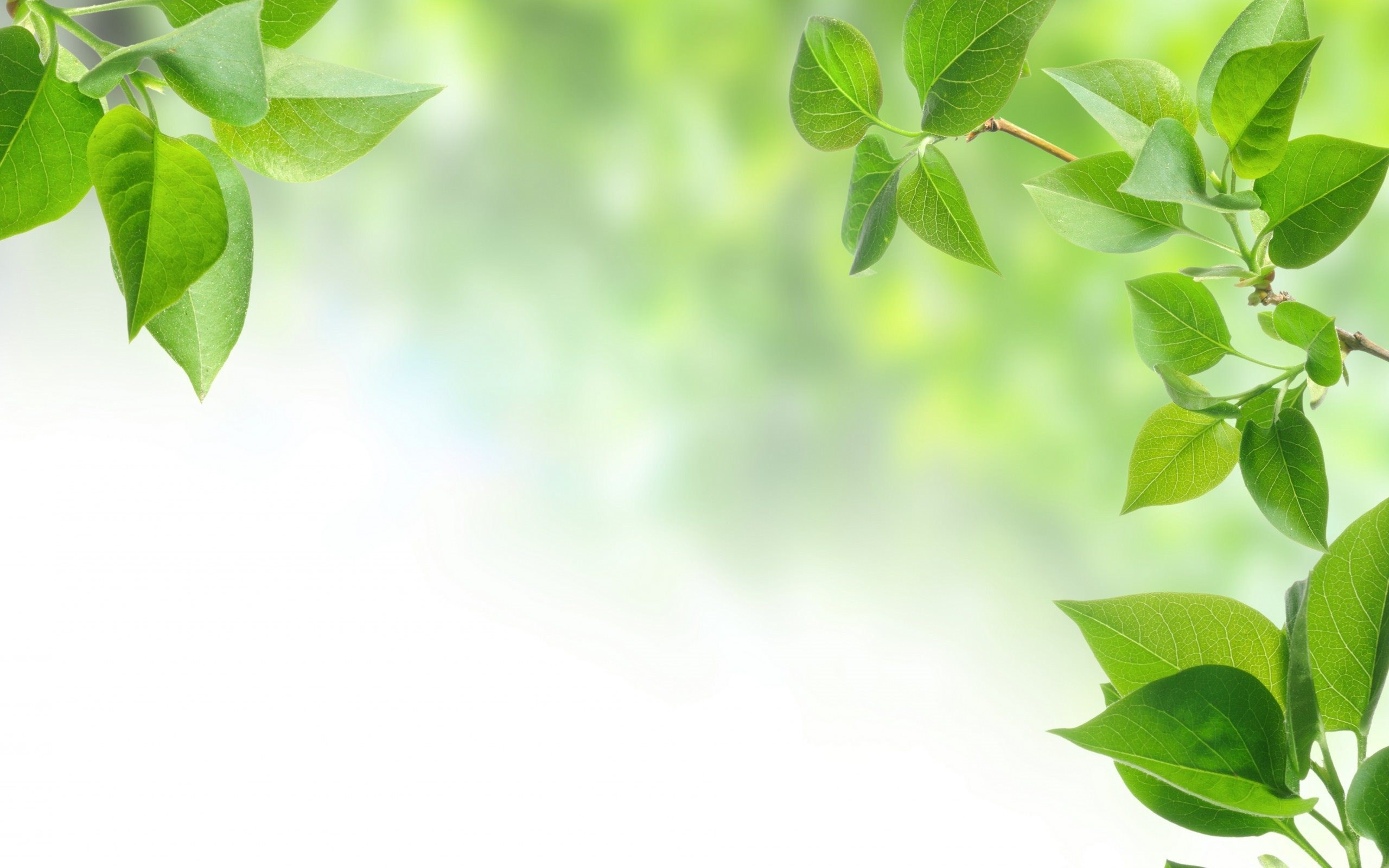 Background Hd Green Png - Green leaves wallpaper background hd