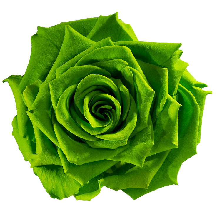 Green Roses Png & Free Green Roses.png Transparent Images