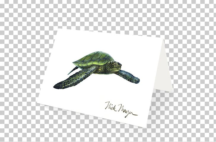 Syngnathidae Png - Green Sea Turtle Giant Sea Bass Syngnathidae PNG, Clipart ...