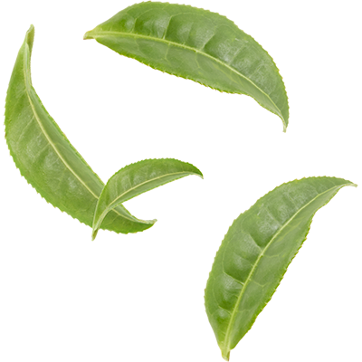 Green Tea Leaves Png Vector Clipart Ps 759021 Png Images Pngio
