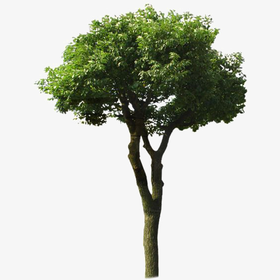 Tree Shade Png - Green Tree, Tree Clipart, Plant, Big Tree PNG Image and Clipart ...