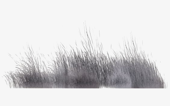 Grey Reed Reeds Grass Gray Png Transp 639846 Png Images Pngio