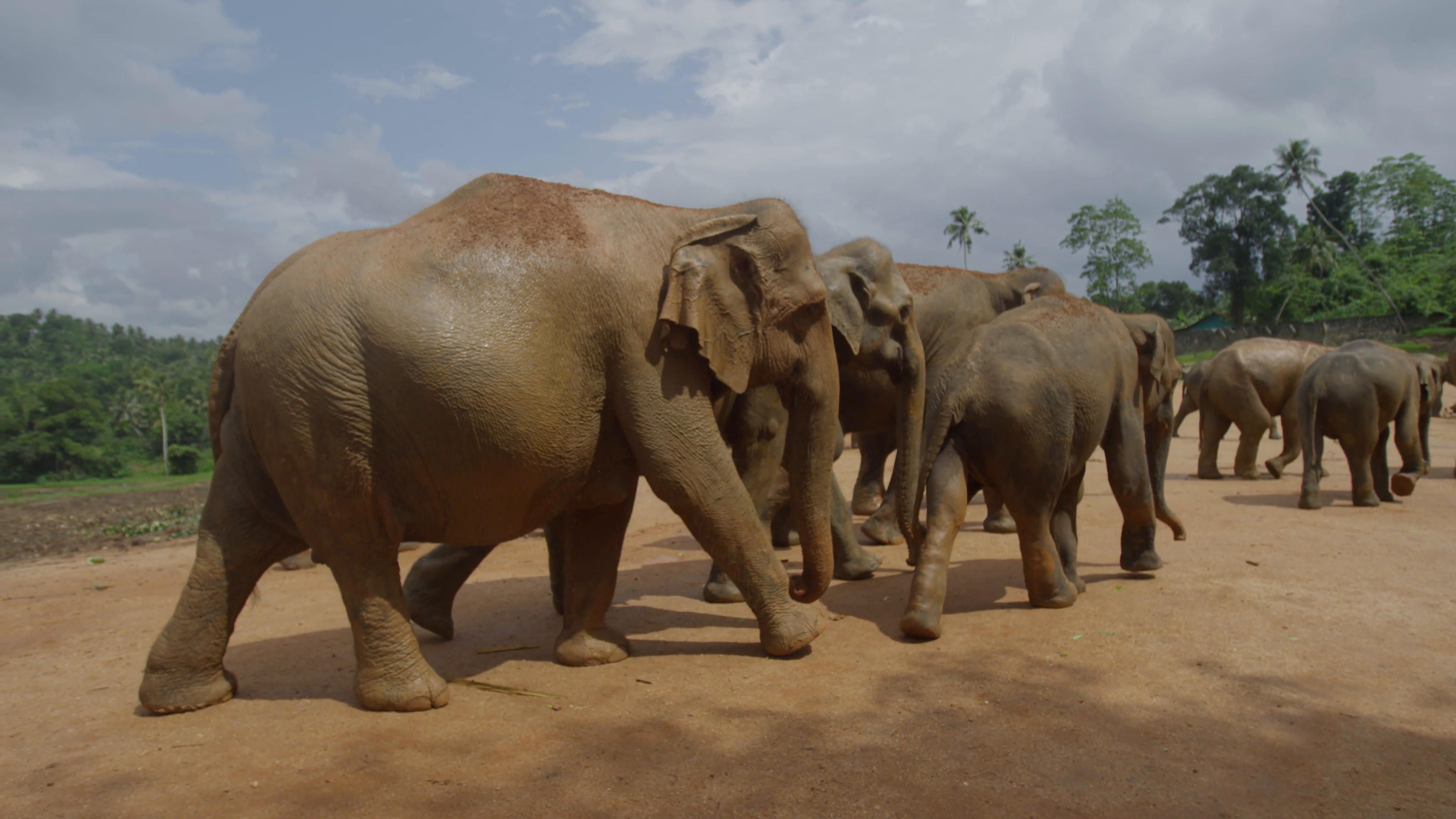 Group Of Elephants Png - Group of elephants walking in slow motion in nature Stock Video Footage -  Storyblocks Video