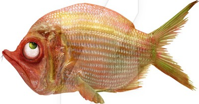 Fish Png - Grumpy Fish png by KingaBritschgi ...