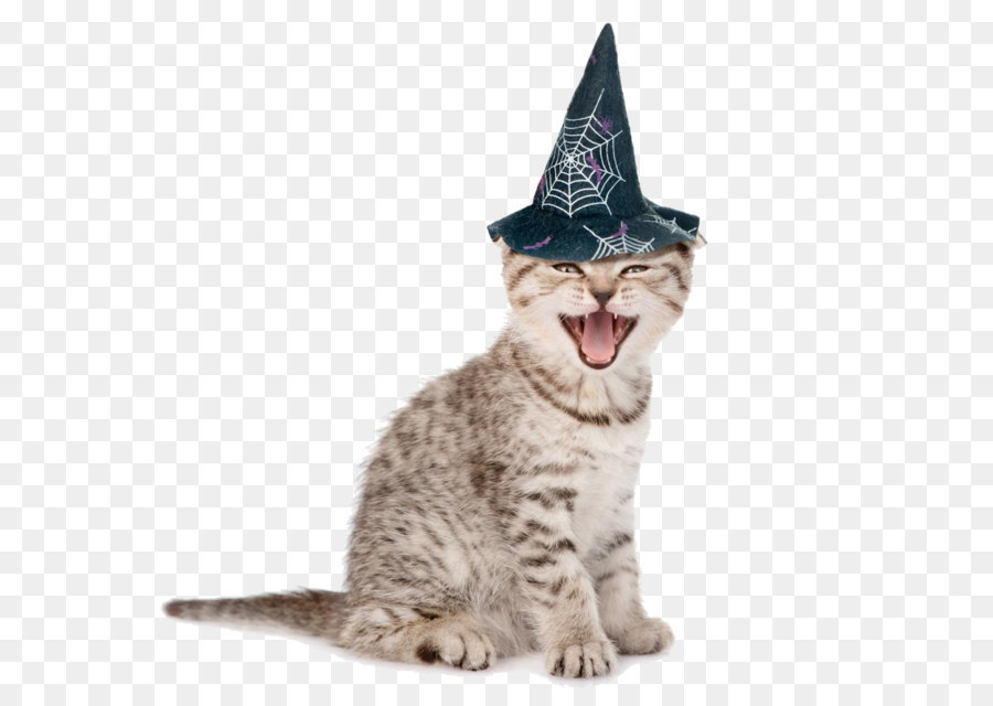 Laughing Cat Png - Happy laughing cat