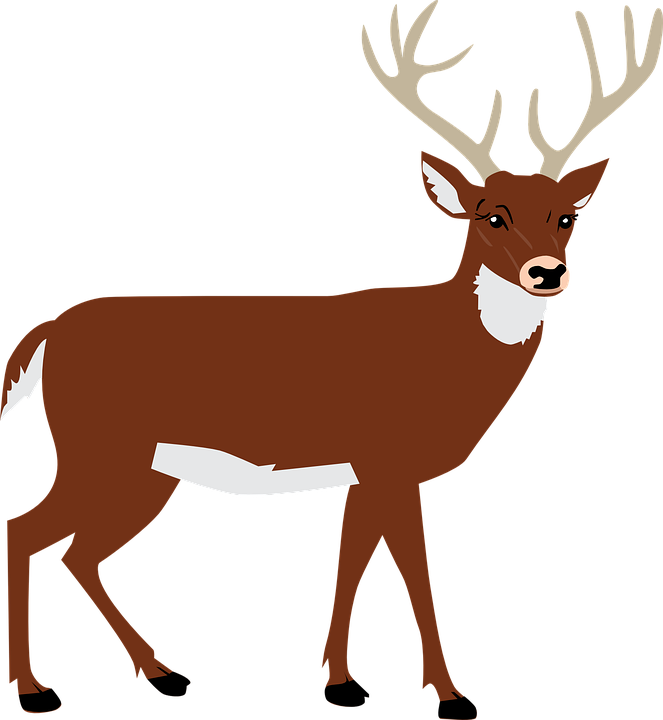 Vector Animals Png - Hart Antlers Forest - Free vector graphic on Pixabay