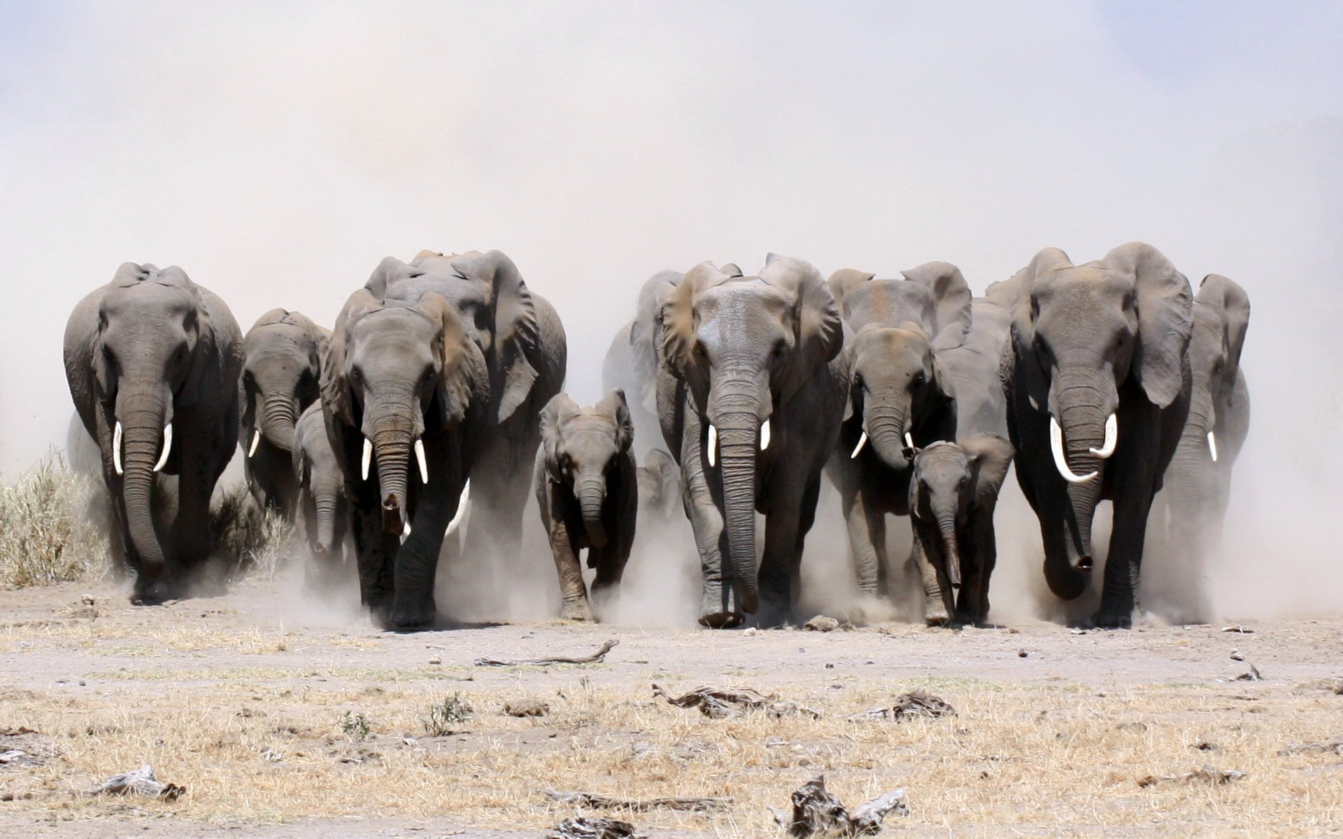 Group Of Elephants Png - HD Wallpaper | Background Image ID:339811