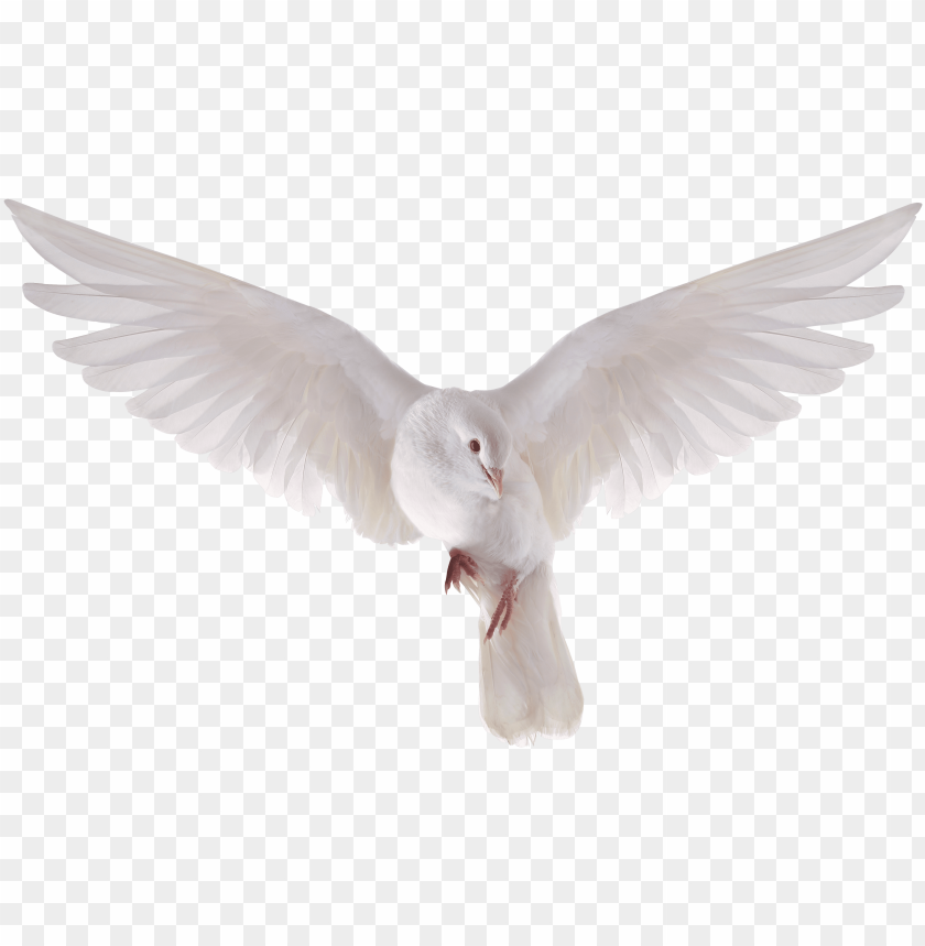 Dove Flying Png - heavenly dove holy spirit transparent png heavenly - flying dove ...