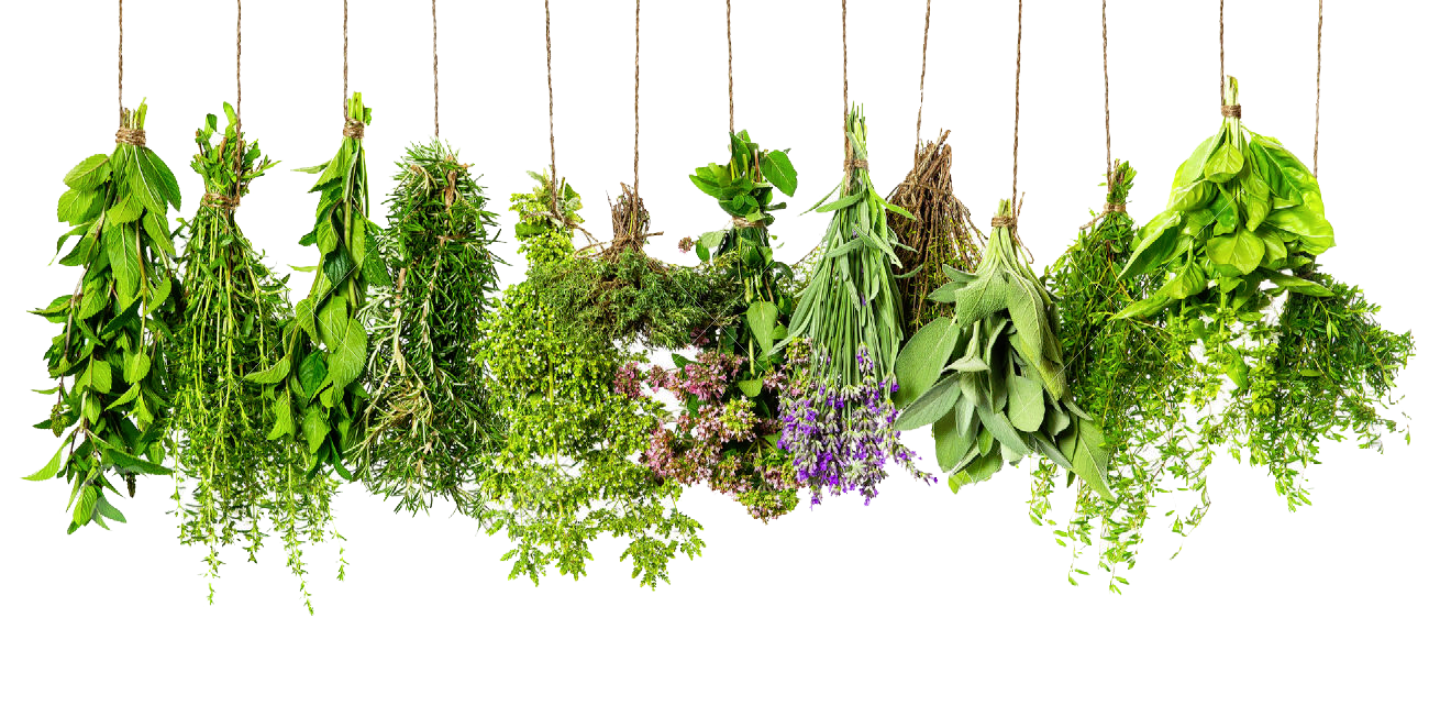 Herb Png - Herbs PNG HD