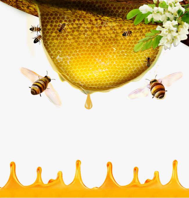 Honey Bee Png & Free Honey Bee png Transparent Images #10173 - PNGio