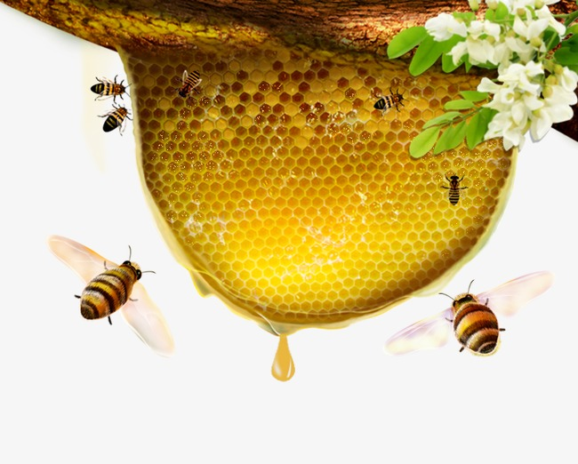 Honey Bee Png - Honey Bee Flowers, Bee Clipart, Honey, Bee PNG and PSD File for ...