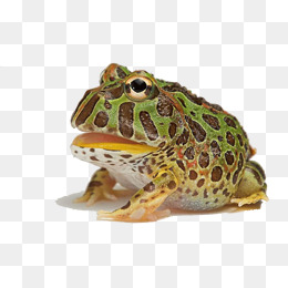 Horned Frog Png - Horned Frogs PNG Images | Vectors and PSD Files | Free Download on ...