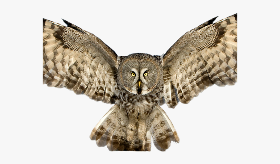 Flying Owl Png - Horned Owl Clipart Flying - Owl With Spread Wings , Transparent ...