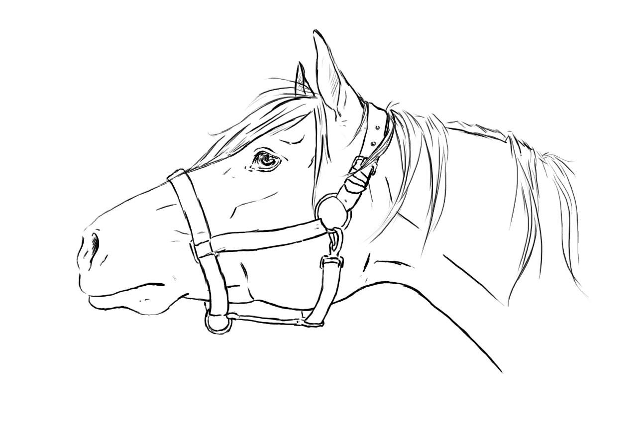 Kleurplaat Fries Paard Horse Lineart Amp Free Horse Lineart Png Transparent Images
