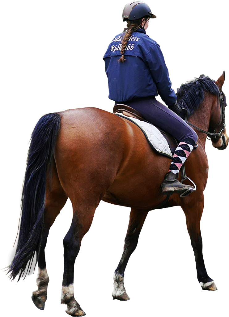 Man On A Horse Png - Horse PNG Image - PurePNG   Free transparent CC0 PNG Image Library