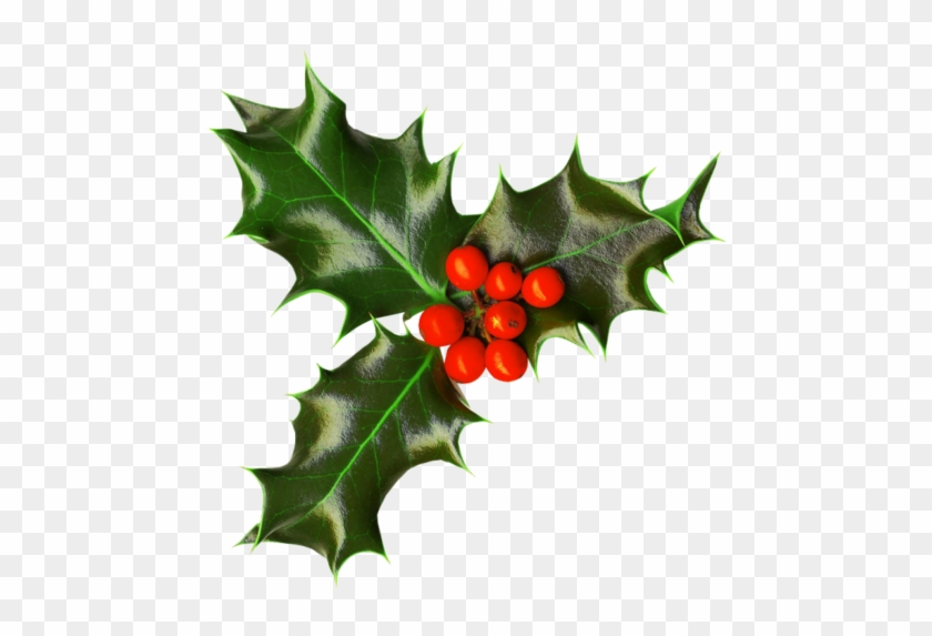 Gui Png - Houx Gui / - Christmas Holly Transparent Png - Free Transparent ...