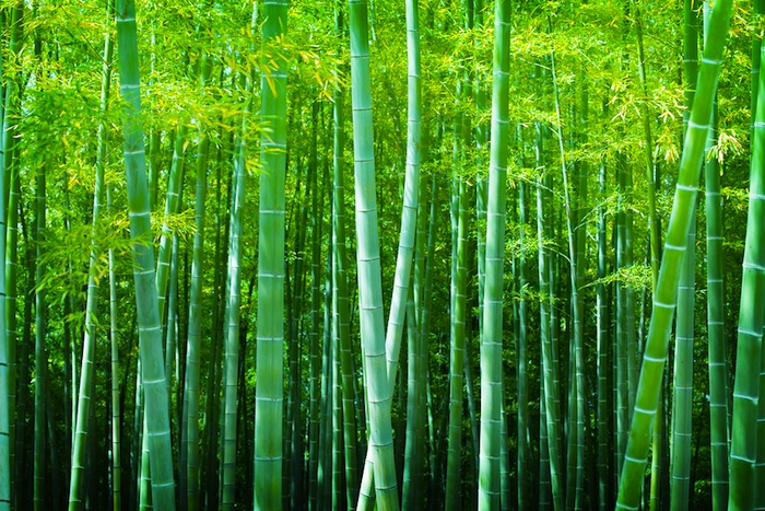 The Bamboo Tree Growth Process Png - How Success is Like a Chinese Bamboo Tree - Matt Morris