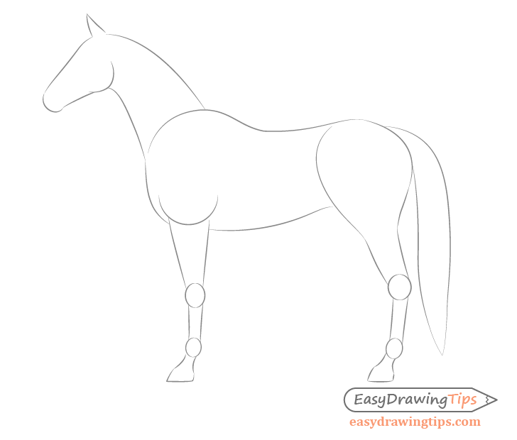 Body Drawing Png Side - How to Draw a Horse From the Side View Tutorial - EasyDrawingTips