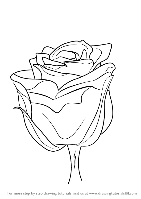 How To Draw A Rose Png - How to Draw a Rose with Stem