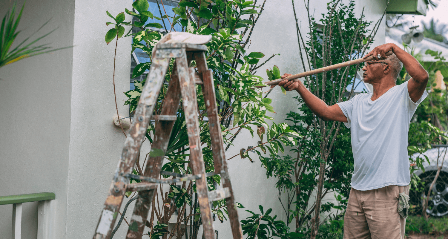 The Bamboo Tree Growth Process Png - How to Find Great House Painters Who'll Do an Incredible Job