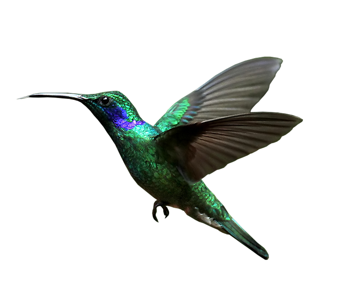 Humming Bird Png - Hummingbird PNG images free download
