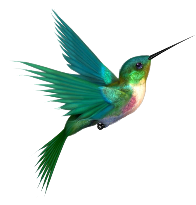Hummingbird Tattoos Png - Hummingbird PNG Transparent Images | PNG All