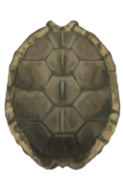 Tortoise Shell Png - Image Sharpened Turtle Shell Shieldpng - DLPNG.com