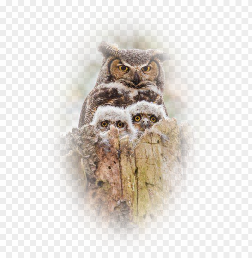 Mother Baby Owl Png - image6 22 - owl mother and baby PNG image with transparent ...