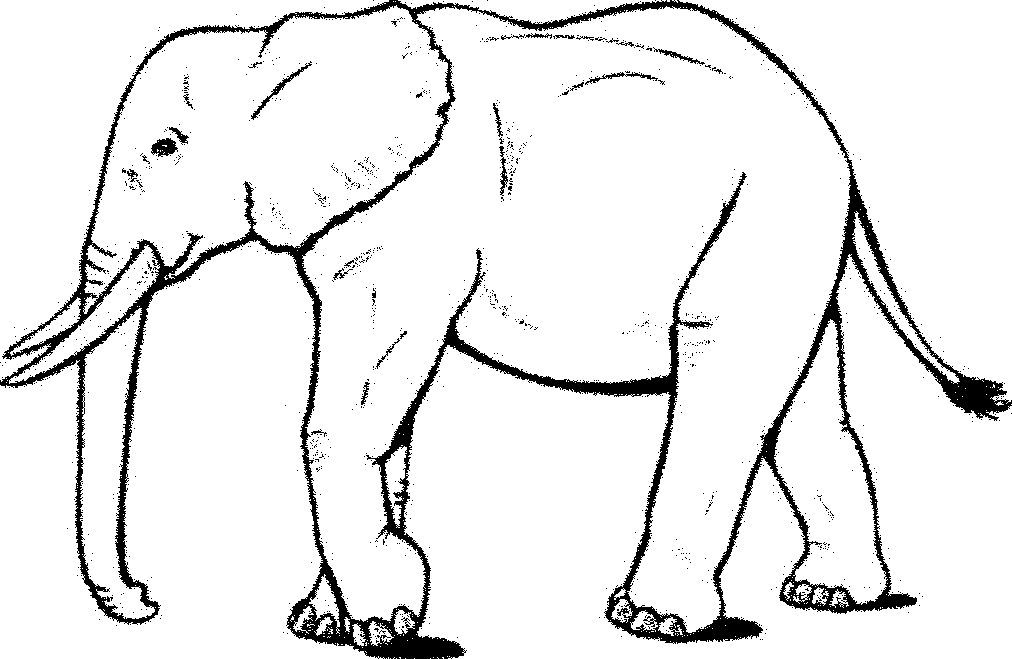 - Images Of Elephant Coloring Pages #1582512 - PNG Images - PNGio