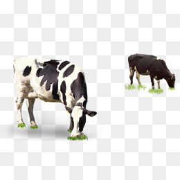Grazing Cow Png - in grazing cows, Cows, Grazing, In Kind PNG Image and Clipart