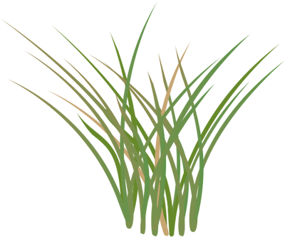 Marsh Reeds Png Free Marsh Reeds Png Transparent Images 16807 Pngio