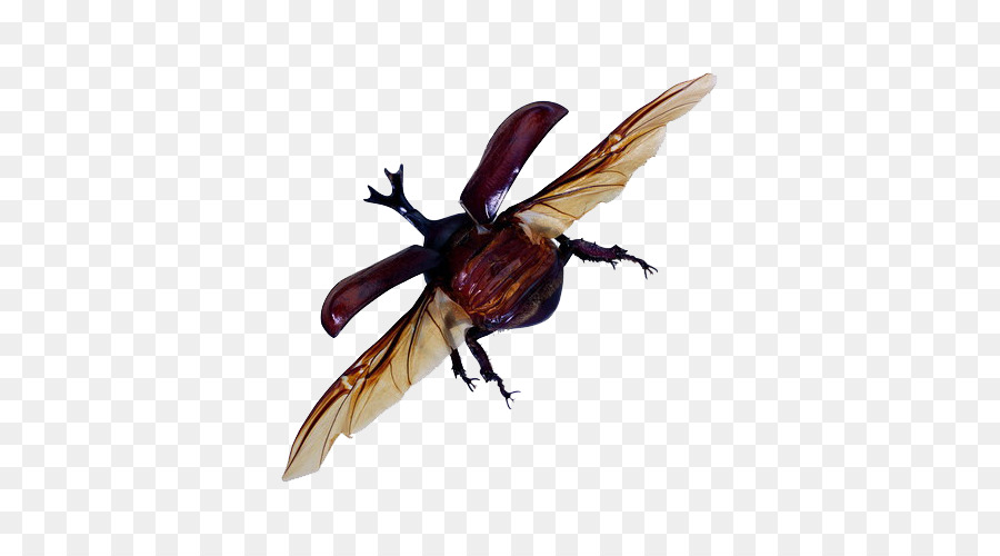 Flying Bug Png - Insect Cockroach Download - Flying insects