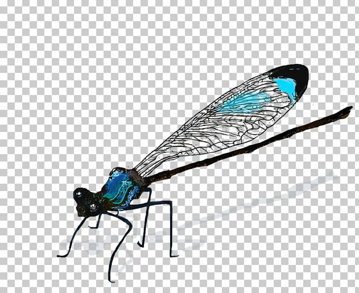 Damselfly Png - Insect Dragonfly Drawing Damselfly PNG, Clipart, Animal, Animals ...