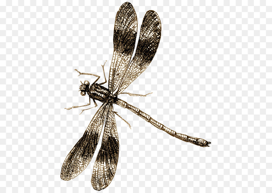 Libelle Png - Insect Fly png download - 508*640 - Free Transparent Insect png ...