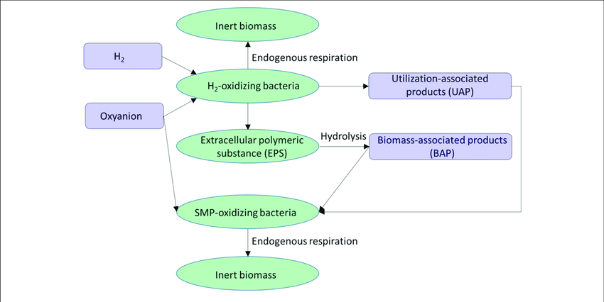 Chemical Species Png - Interaction of the four biomass species (ellipses) via four ...