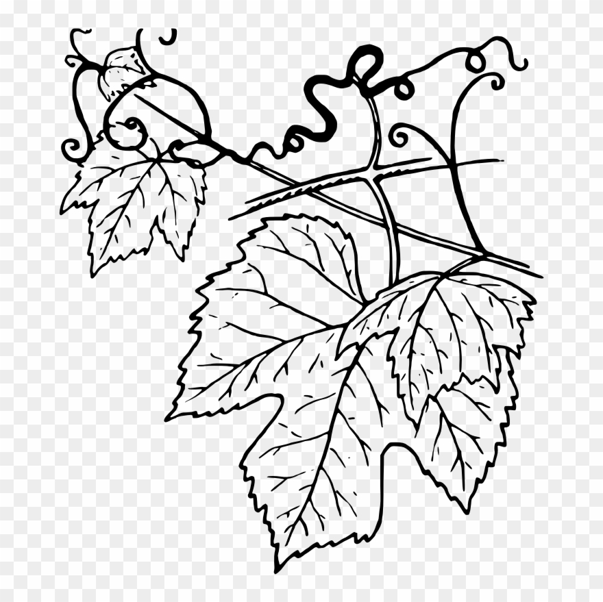 Ivy Clipart Grape Leave Grape Leaves B 1819558 Png Images Pngio