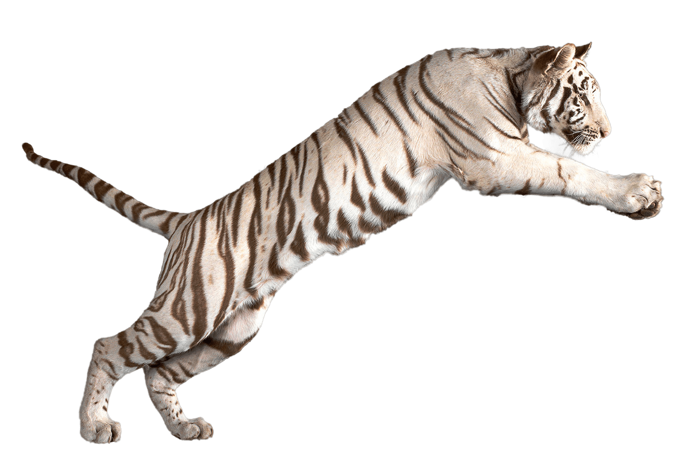 White Tiger Png & Free White Tiger.png Transparent Images ...