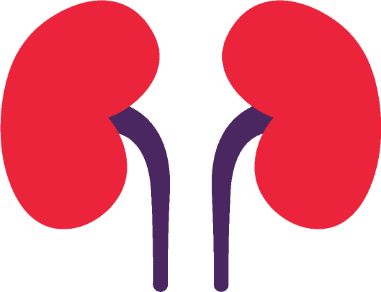 Kidney Png - Kidney Png (96+ images in Collection) Page 1