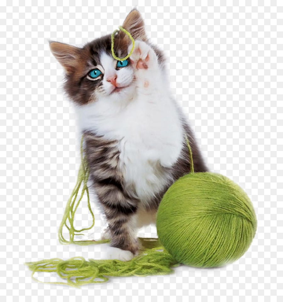 Kitten Playing With Yarn Png - Kitten Cat play and toys Yarn Cuteness - kitten