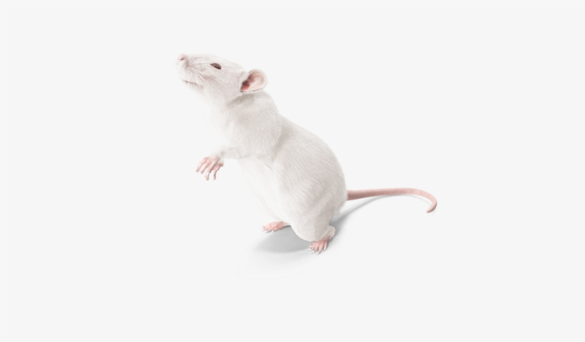 Lab Rats Png - Lab Rat Png PNG Image | Transparent PNG Free Download on SeekPNG