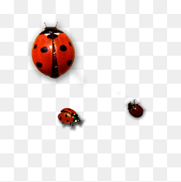 Ladybug Png - ladybug, Insect, Ladybug, Ladybug Clipart PNG Image and Clipart
