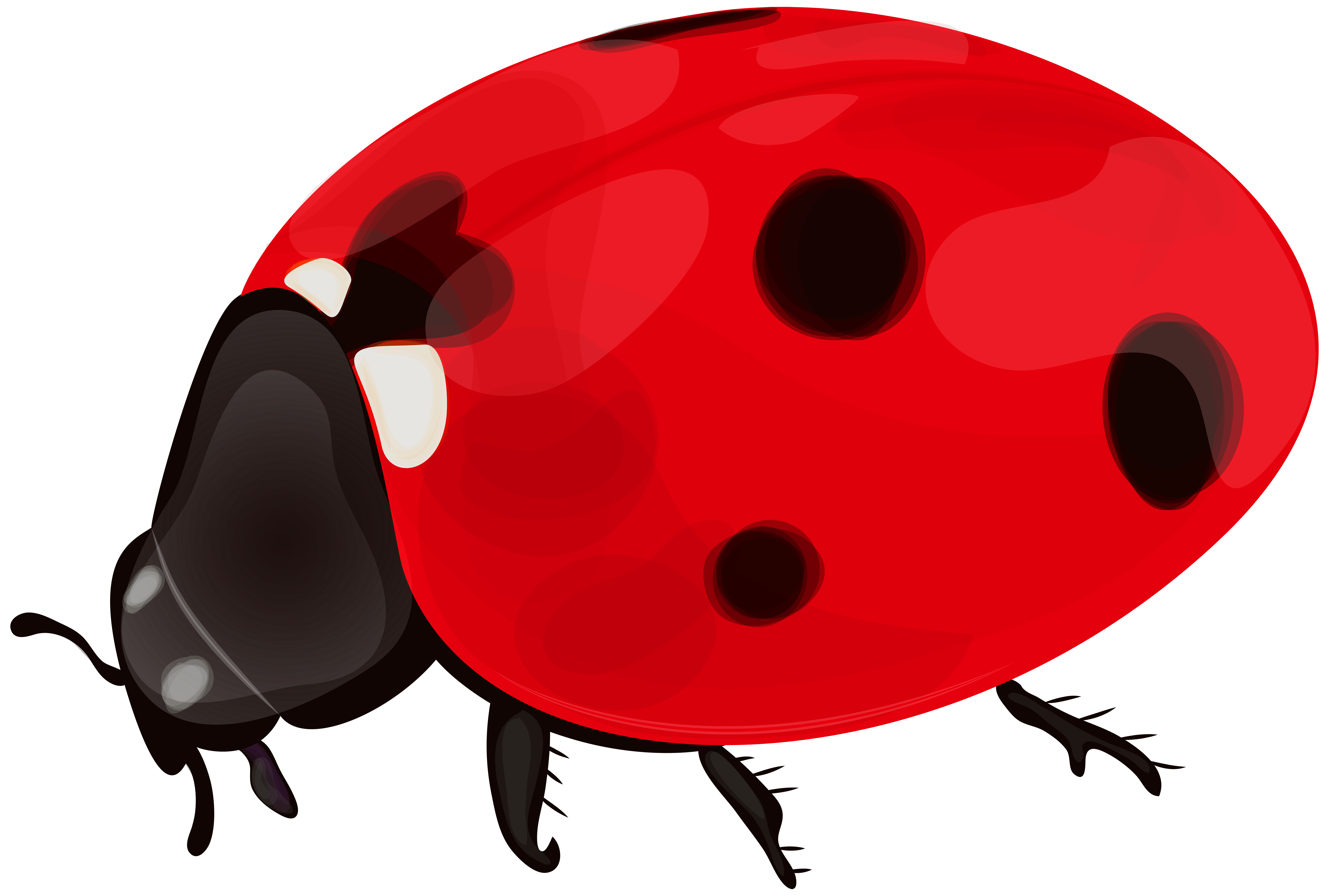 - Ladybug PNG Clip Art Gallery Yopric #184467 - PNG Images - PNGio
