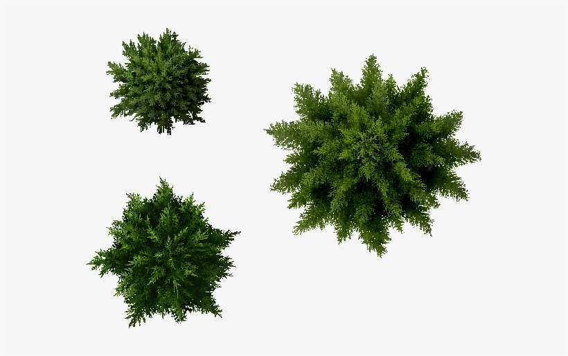 Landscaping Layout Png Pine Tree Amp Free Landscaping Layout