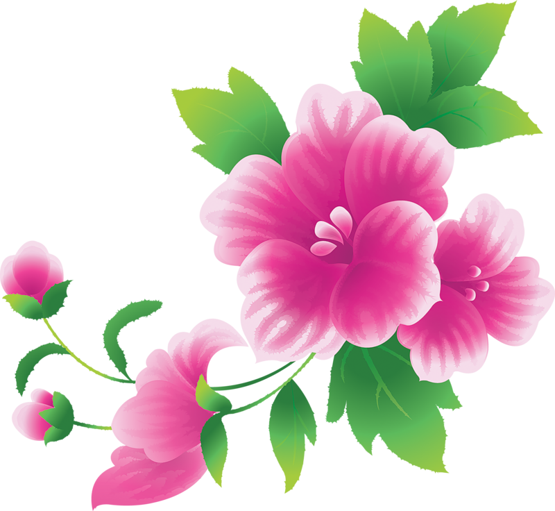 Flower Clipart Png - Large Pink Flowers Clipart   Gallery Yopriceville - High-Quality ...