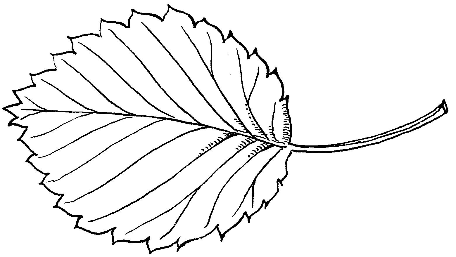 Black And White Png Leaf - Leaf black and white png 1 » PNG Image
