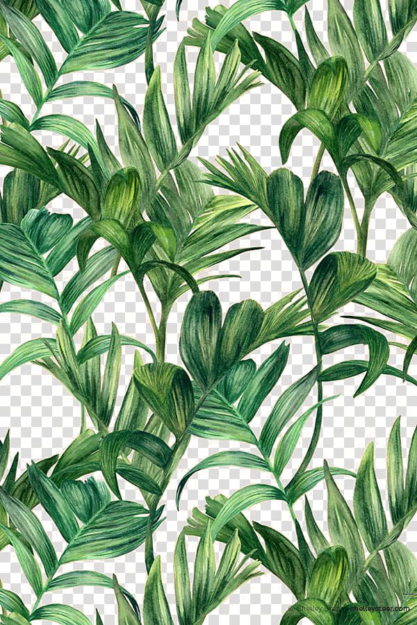 Electric Arches Png - Leaf Green Electric Arches , Palm leaf, green leafed plant ...