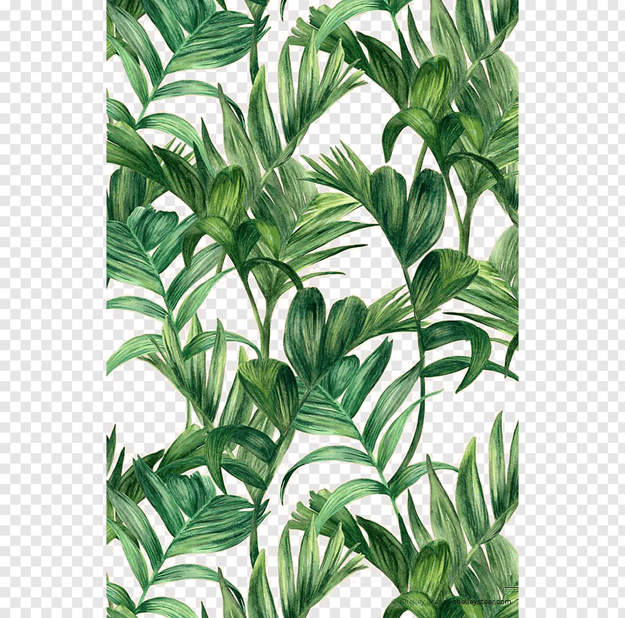 Electric Arches Png - Leaf Green Electric Arches, Palm leaf, green leafed plant ...