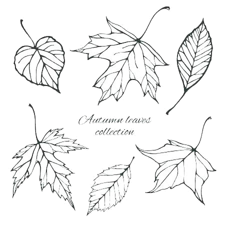 It's just a graphic of Leaves Coloring Pages Printable intended for elm tree