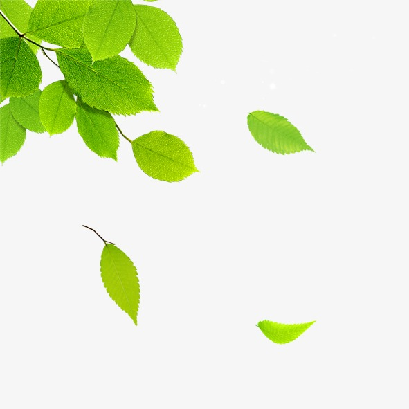 Png Leaf - Leaf PNG Images | Vectors and PSD Files | Free Download on Pngtree