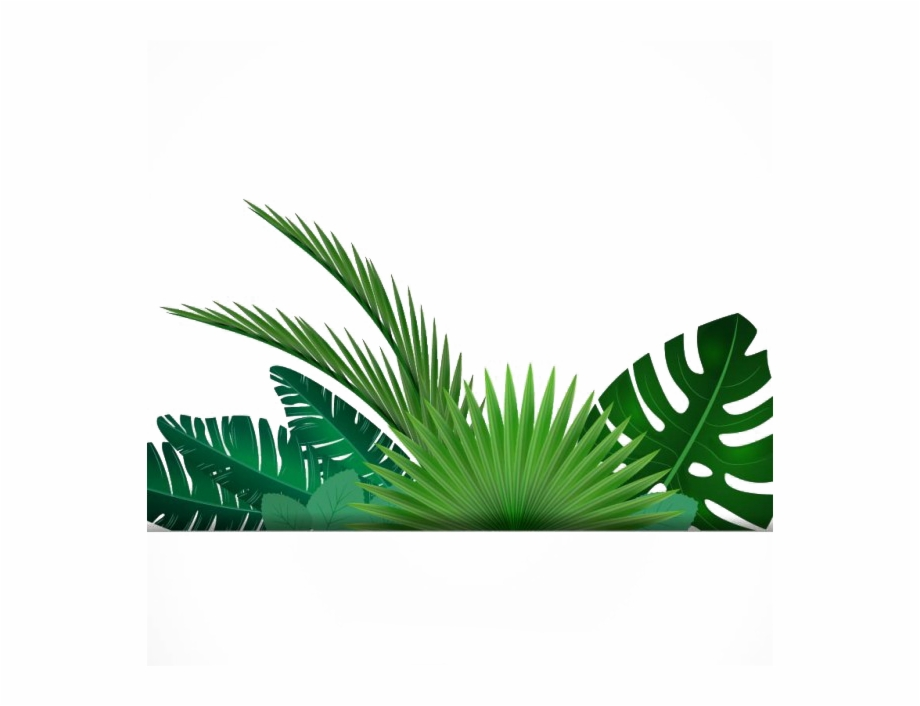 Tropical Background Pictures Png Free Tropical Background Pictures Png Transparent Images 56937 Pngio Upload only your own content. tropical background pictures png free